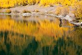 Golden Autumn Reflections