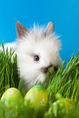 foto of chucky  - Downy bunny is in the thick green grass near the Easter eggs - JPG