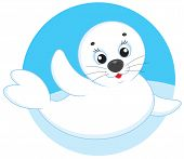White-coat seal