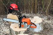 stock photo of chainsaw  - Chainsaw safety equipment and cutting tree in forest - JPG