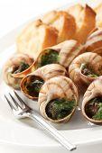 escargot, snails a la bourguignonne