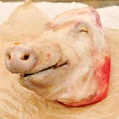 image of mutilated  - A pig - JPG