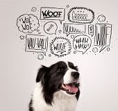 image of white bark  - Cute black and white border collie with barking speech bubbles above her head - JPG