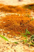 image of fire ant  - Ants nest with green grass in the nature - JPG