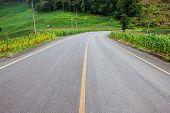 Road in corn fields