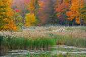 foto of marshlands  - A autumn Swamp Landscape in the early fall season - JPG