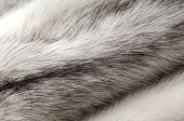 picture of villi  - Pastel black cross mink fur texture close - JPG