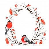 Frame with bullfinches sitting on branch of rowan, vector illustration.