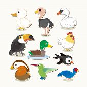 Cute Vector Bird Set