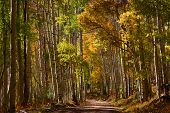 Back road in Colorado through autumn trees