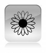 Flower Spring Icon