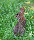 Staring Rabbit