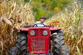 Old Farmer Driving The Tractor In The Cornfield
