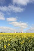 Refinery Next To Rapeseed Field