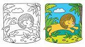 Little Lion Coloring Book