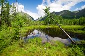 Tajga In Sayan Mountains - Buryatia - Russia