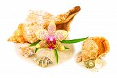 Shells On Sand With Orchid And Bamboo