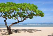 foto of dua  - Tree on Nusa Dua beach - JPG