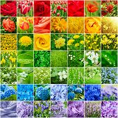 image of hydrangea  - Collage from many images of different colorful flowers - JPG