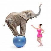picture of circus clown  - Circus clown girl and elephant balancing on a blue ball - JPG