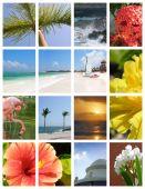 Paradise Collage