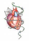 Drawn Human Heart