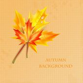 Autumn Maple Leaves On A Background Of Notebook Sheet With Place For Your Text