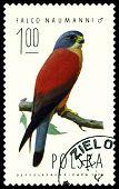 Vintage  Postage Stamp. Falcon  Naumanni.