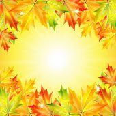Autumn Background With Yellow Maple Leaves And Place For Your Text