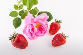 Strawberries And Rose Flower
