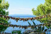 Padlocks Of Love Makarska