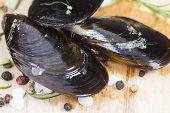 Raw Mussels Closeup