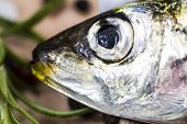 Macro Shot Of A Sardine Head