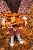 holding autumn leaves season background