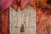 snail crawling autumn leaves wood background