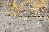 Old Dark Concrete Wall With Yellow Lichen Background Texture