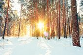 stock photo of cold-weather  - Landscape with winter forest and bright sunbeams - JPG