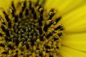 Bright Yellow Flower Macro