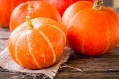 Ripe Organic Orange Pumpkins