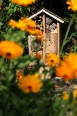pic of stick-bugs  - Wooden insect house decorative bug hotel ladybird and bee home for butterfly hibernation and ecological gardening - JPG