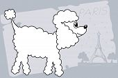 pic of poodle  - vector illustration - JPG