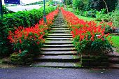 Red salvia stairs