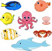 picture of aquatic animal  - Vector illustration - JPG