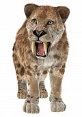 picture of saber tooth tiger  - 3D digital render of a standing smilodon or a saber toothed cat isolated on white background - JPG