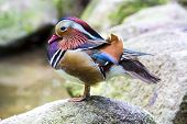 bird on a rock near the water
