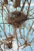 bird's nest of thin dry branches