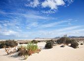 Fuerteventura, Corralejo Sand Dunes