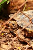 foto of tortoise  - Tortoise trapped in a cage and tortoise crawling