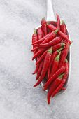 close up scope of Red chili paddy