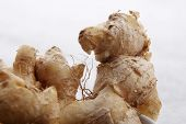 close up of the ginger